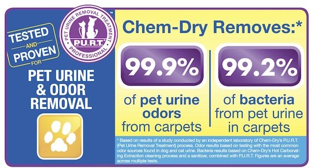 pet urine cleaning study